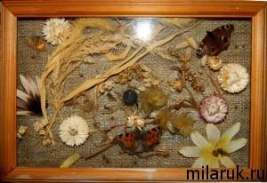 Панно из сухоцветов с бабочками в рамке со стеклом