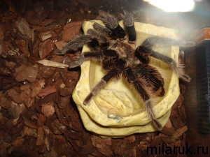 паук,рассказ о пауках,животные,рукописное творчество,паук фотографии