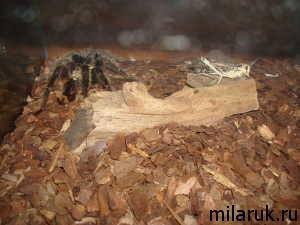 паук,террариум,охота паука,животные,рассказ о пауке