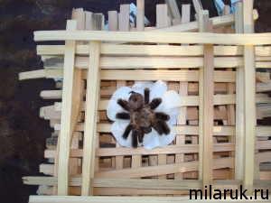 паук,жизнь пауков,животные,рассказ о пауках,костер