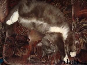 рассказ про кота,спящий кот,животные,коты фото прикольные