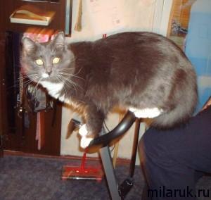 история про кота,животные,коты фото прикольные